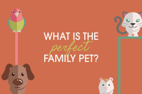 perfect-family-pet