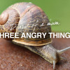 three-angry-things