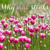 why-pink-stinks3