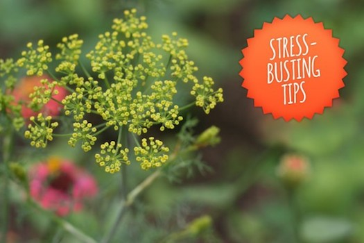 Stress-busting-tips-570x380