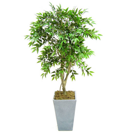 original_artificial-french-ficus-tree