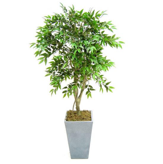 original_artificial-french-ficus-tree